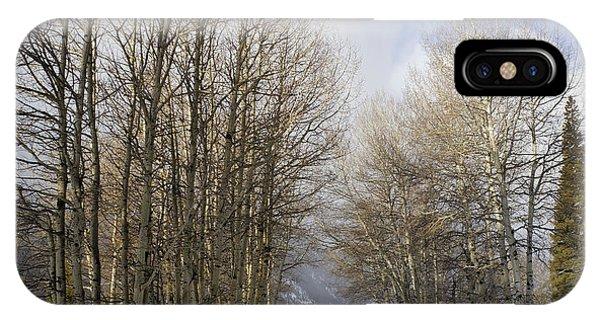 Aspen Trees Along Snowy Colorado Path IPhone Case
