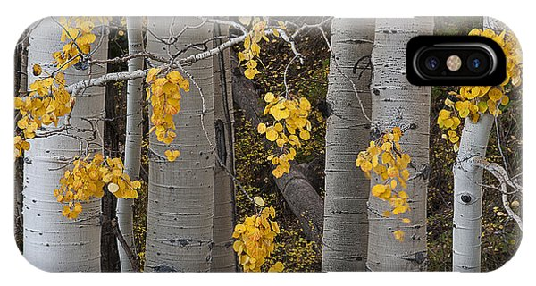 Aspen Trees IPhone Case