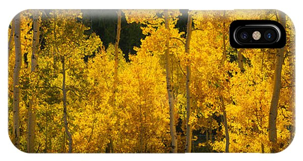 San Miguel iPhone Case - Aspen Trees In A Forest, Telluride, San by Panoramic Images