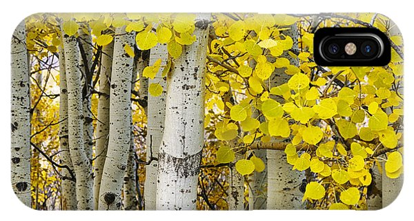 Aspens At Autumn IPhone Case
