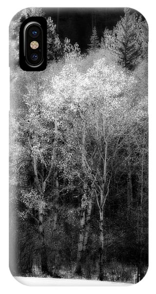 Aspens In Morning Light Bw IPhone Case