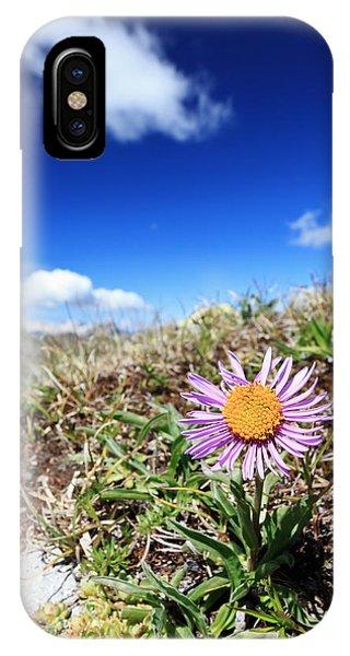 Aster Alpinus IPhone Case