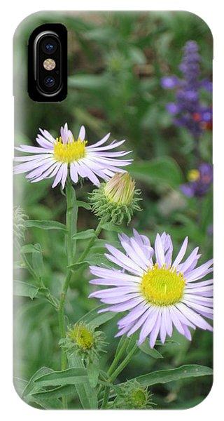 Asters In Close-up IPhone Case