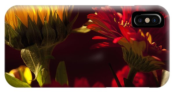 Asters In The Light IPhone Case