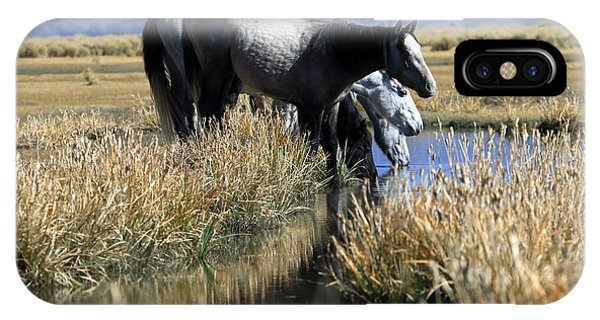 At The Water Hole IPhone Case