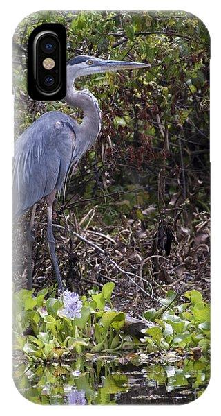 Atchafalaya Swamp Blue Heron IPhone Case