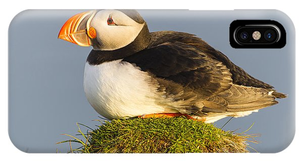 Atlantic Puffin Iceland IPhone Case
