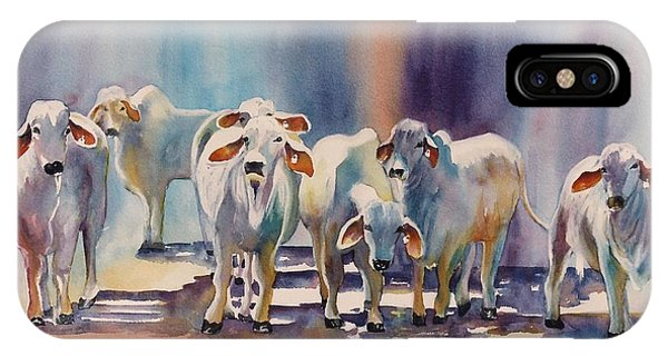 Attention All Ears.  Brahman Bulls IPhone Case