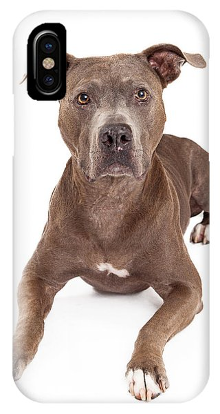 Pitbull iPhone Case - Attentive American Staffordshire Terrier Dog Laying by Susan Schmitz