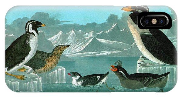 Auklets iPhone Case - Audubon Auks by Granger