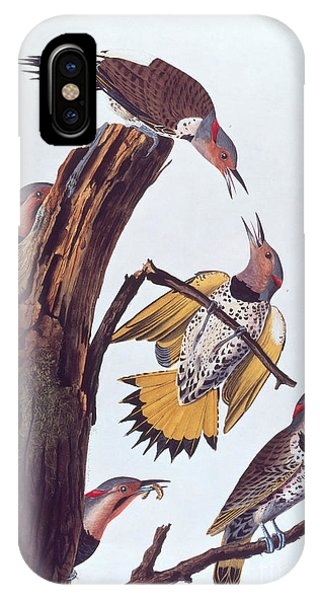 Northern Flicker iPhone Case - Audubon Golden-winged Woodpeckers by NAS Science Source