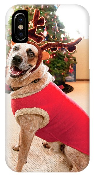 Barbara Steele iPhone Case - Auggie The Dog With Reindeer Outfit by Kevin Steele