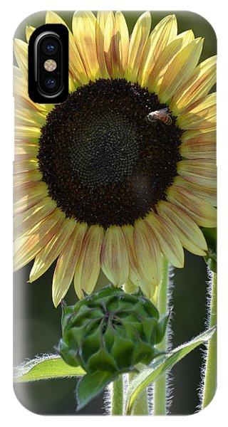 August Sunflower IPhone Case