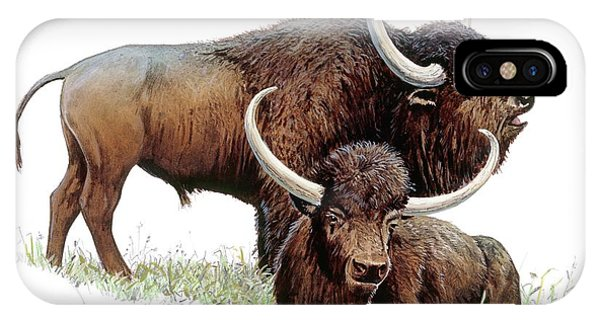 Aurochs Phone Case by Michael Long/science Photo Library