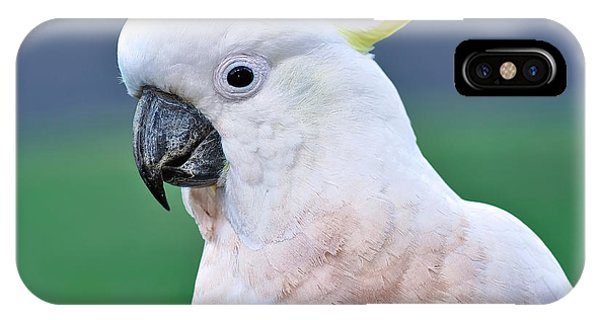 Australian Birds - Cockatoo IPhone Case