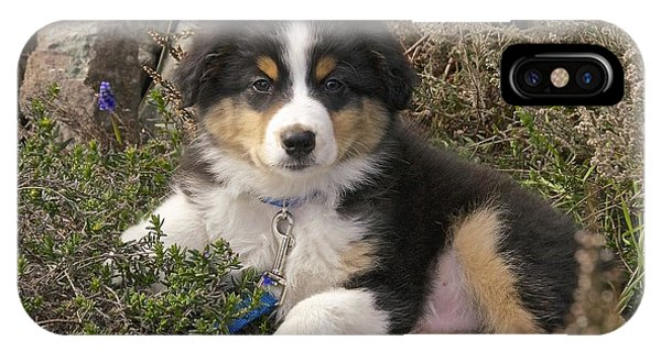 Australian Shepherd Puppy IPhone Case