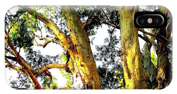 Australian Trees Phone Case by John Potts