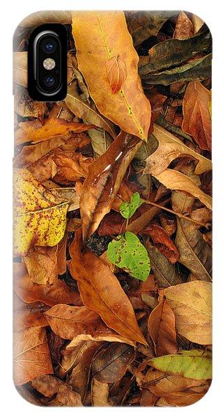 Autumn 02 IPhone Case