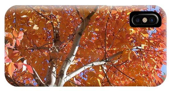 Autumn Aspen IPhone Case