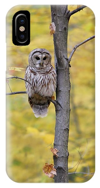 Autumn Barred Owl IPhone Case