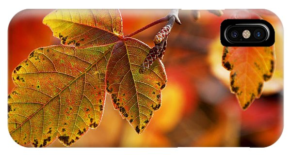 #autumn IPhone Case