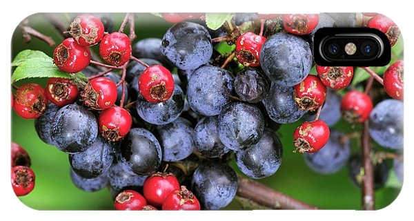 Blue Berry iPhone Case - Autumn Berries by Colin Varndell/science Photo Library