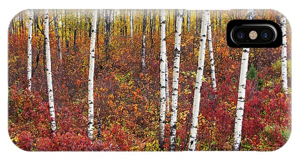 Autumn Birches IPhone Case
