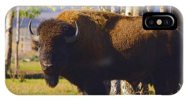 Autumn Bison IPhone Case