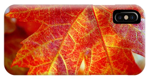Autumn Blaze IPhone Case