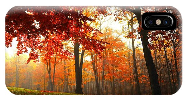 Autumn Canopy IPhone Case