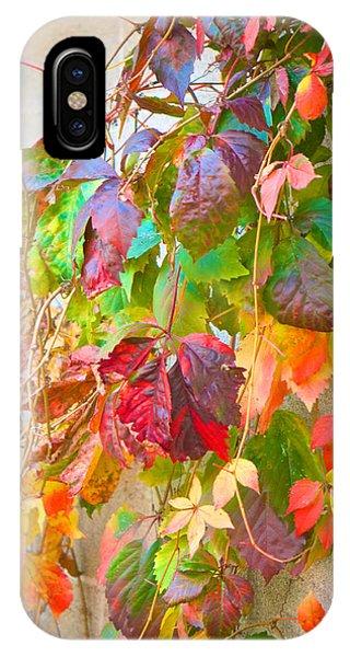 Autumn Colors Of Virginia Creeper IPhone Case