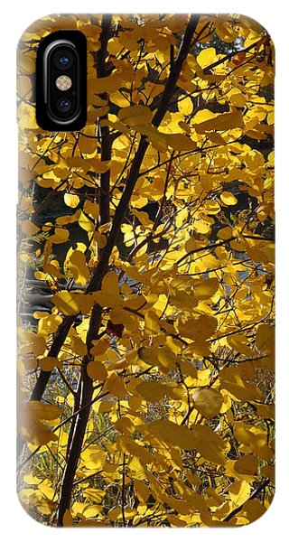 Autumn Cross IPhone Case