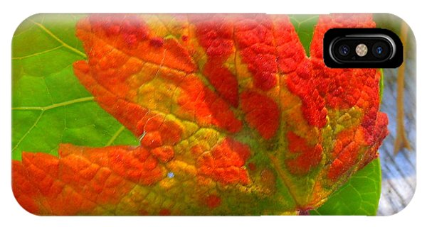 Autumn Delight IPhone Case