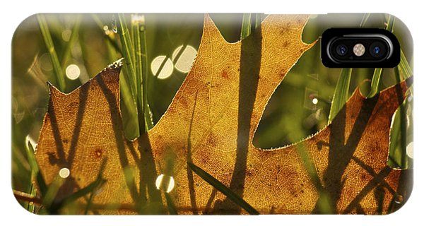 Autumn Dew IPhone Case