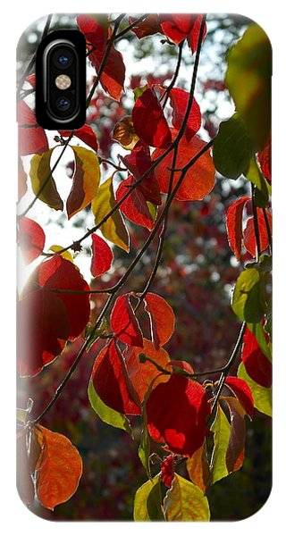 Autumn Dogwood In Evening Light IPhone Case