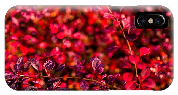 Violet Flame iPhone Case - Autumn Flames 6 - Square by Alexander Senin