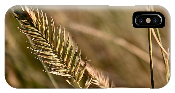 Autumn Grasses IPhone Case