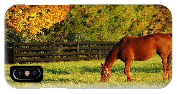 Autumn Grazing IPhone Case