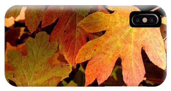Autumn Hues IPhone Case
