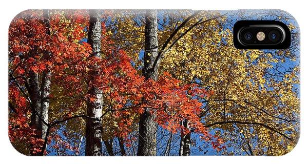 Autumn II IPhone Case