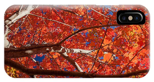 Autumn In Australia IPhone Case
