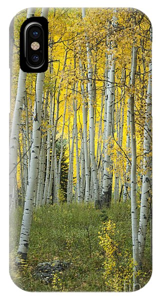 Bell iPhone Case - Autumn In The Aspen Grove by Juli Scalzi