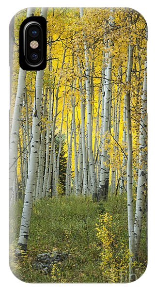 Autumn In The Aspen Grove IPhone Case