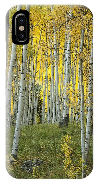 Deciduous iPhone Case - Autumn In The Aspen Grove by Juli Scalzi