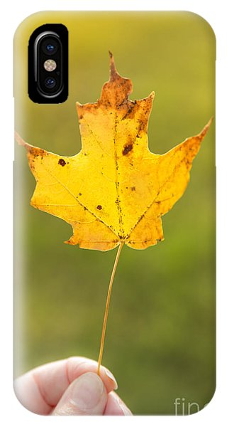 New England Fall Foliage iPhone Case - Autumn Leaf by Diane Diederich