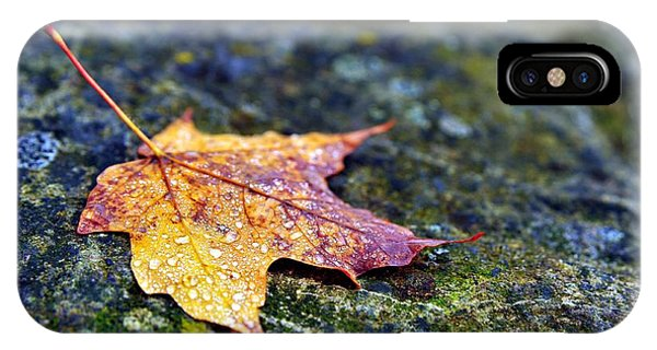 Autumn Leaf On Rocky Ledge IPhone Case
