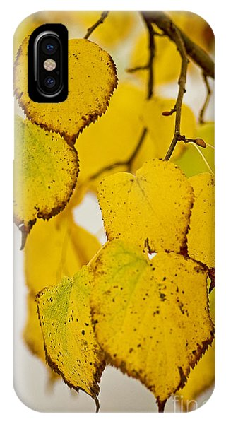 Autumn Leaves Phone Case by Nick  Boren