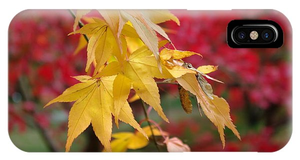 Autumn Leaves Phone Case by Tony Serzin