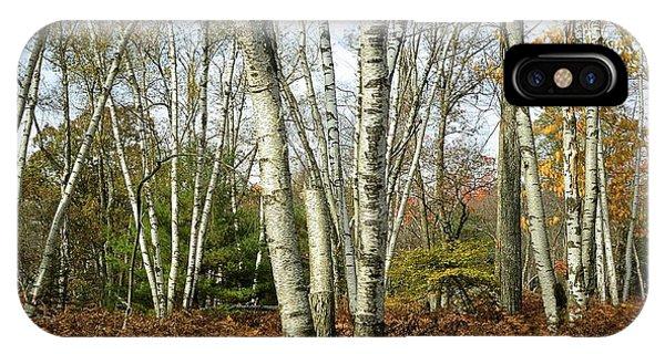 Autumn Majesty - Marion Brooks Natural Area IPhone Case
