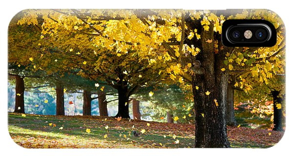 Autumn Maple Tree Fall Foliage - Wonderland IPhone Case
